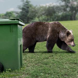 سطل زباله ضدخرس؛ اختراعی مبتنی بر یک نیاز در مناطق کوهستانی